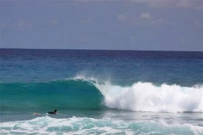 Surfing in Cabarete. Quelle: ...