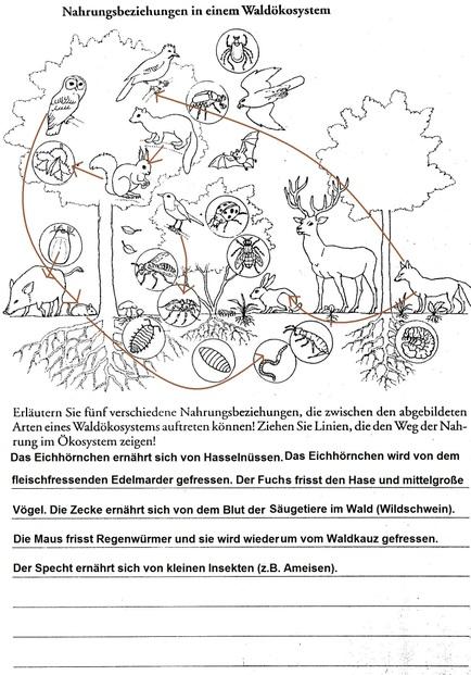 Das Okosystem Wald