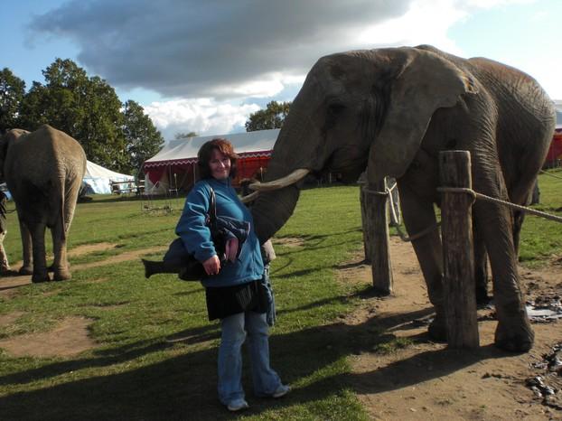 sie m chten gern auf einem elefanten reiten. Black Bedroom Furniture Sets. Home Design Ideas