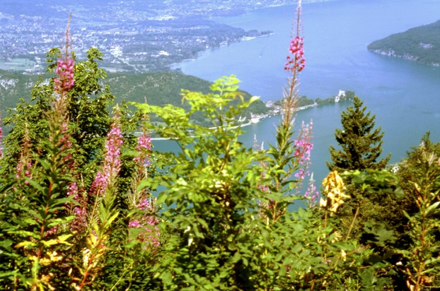 See Annecy - Lac d'Annecy
