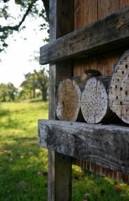 bl hende wiesen und frisches obst vom schutz der wildbienen profitieren wir alle. Black Bedroom Furniture Sets. Home Design Ideas