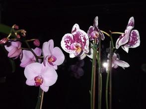orchideen besondere sch ne pflanzen. Black Bedroom Furniture Sets. Home Design Ideas