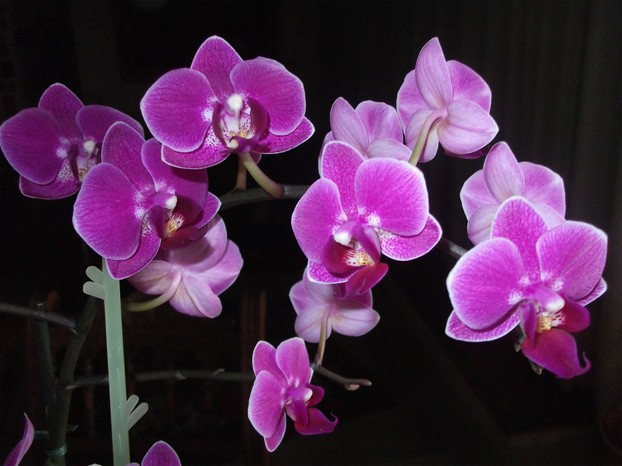 orchideen teil 2 pflegetipps vom bodenpersonal. Black Bedroom Furniture Sets. Home Design Ideas