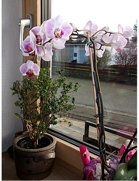 Orchideen teil 3 d ngen und gesund erhalten for Kleine fliegen in topfpflanzen
