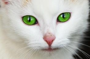 Braune bedeutung grüne augen Grün