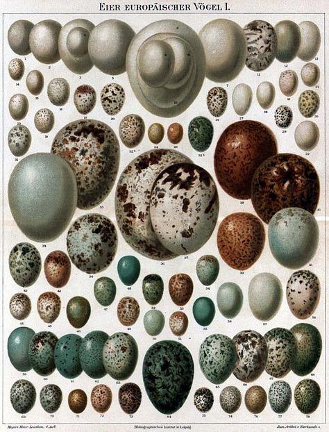 Ein Dutzend Fakten um Ostern und das Ei