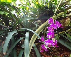 wie stylt man die trendfarbe radiant orchid. Black Bedroom Furniture Sets. Home Design Ideas
