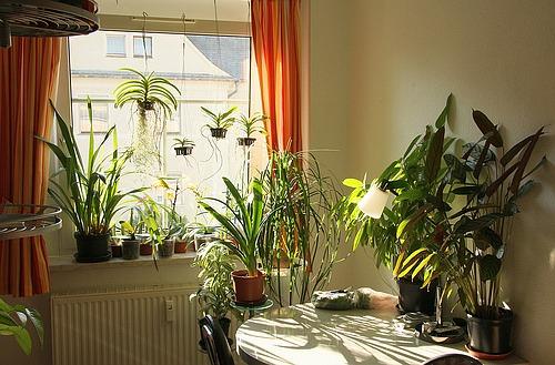 welche palmen eignen sich f r die wohnung. Black Bedroom Furniture Sets. Home Design Ideas