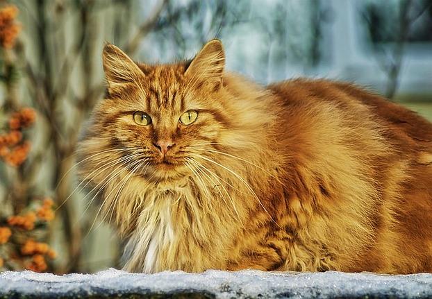 die süßeste katze