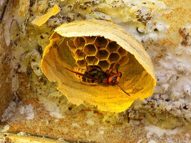 hummeln bienen wespen und hornissen gemeinsamkeiten. Black Bedroom Furniture Sets. Home Design Ideas