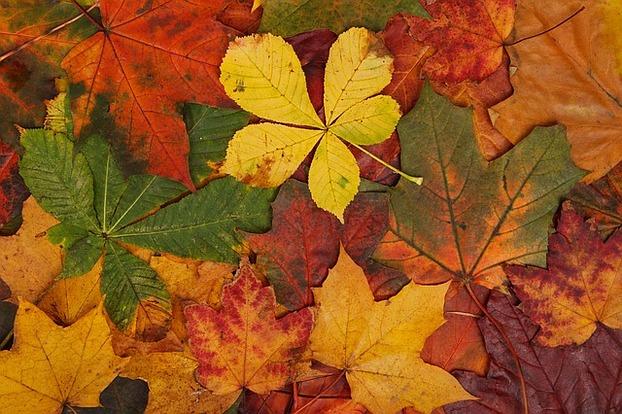Bildergebnis für Herbstbild