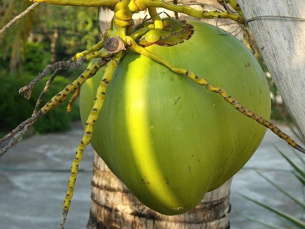 kokoswasser kaufen so wirkt der sch nheitsdrink. Black Bedroom Furniture Sets. Home Design Ideas