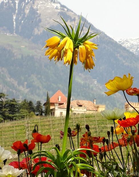 schachbrettblume oder kaiserkrone wie soll man diese liliengew chse pflanzen. Black Bedroom Furniture Sets. Home Design Ideas