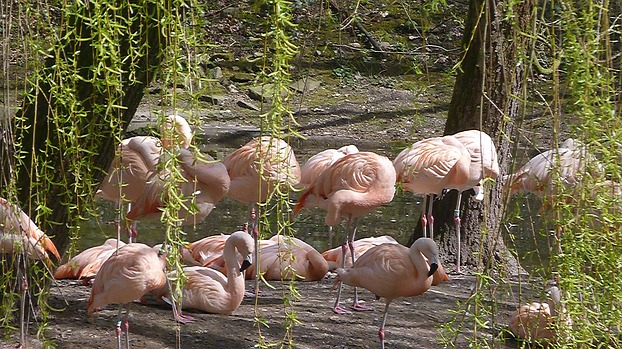 Flamingo´s Zoo Dortmund