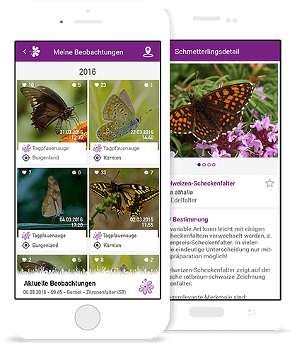 Schmetterlings-App