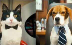 """Cats & Dogs - Die Rache der Kitty Kahlohr""."