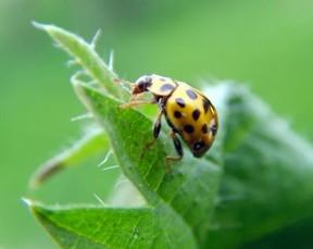 insektenhotel nisthilfe f r n tzliche insekten selber bauen. Black Bedroom Furniture Sets. Home Design Ideas