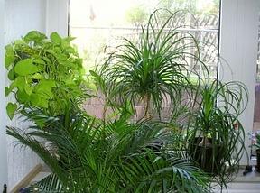 zimmerpflanzen positive effekte auf raumklima und gesundheit. Black Bedroom Furniture Sets. Home Design Ideas