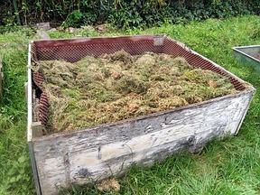 Garten gestalten pflanzen sichtschutz garten for Garten mit sichtschutz gestalten