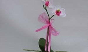 vanda orchideen mit pflegesteckbrief zum ausdrucken. Black Bedroom Furniture Sets. Home Design Ideas