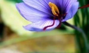 Welche Blumen Schenkt Man Zum Muttertag, Geburtstag, Ostern?? Blumen Schenken Tipps