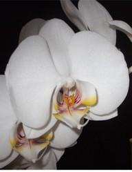 orchideen teil 3 d ngen und gesund erhalten. Black Bedroom Furniture Sets. Home Design Ideas