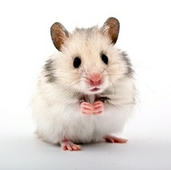 Wie heist die dating seiten mit hamster.com