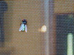 insektenschutz drinnen drau en. Black Bedroom Furniture Sets. Home Design Ideas