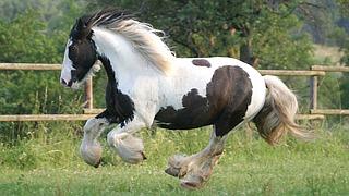 unterhaltsames pferder tsel f r kinder welche pferderasse ist gemeint. Black Bedroom Furniture Sets. Home Design Ideas