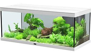 saubermacher im aquarium. Black Bedroom Furniture Sets. Home Design Ideas