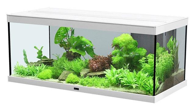 Aquarium Licht – Pflanzen – Algen