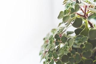 die besten zimmerpflanzen zur luftreinigung. Black Bedroom Furniture Sets. Home Design Ideas