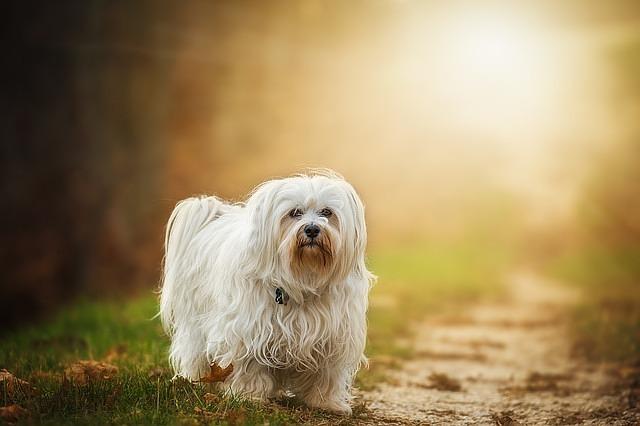 Was Hilft Gegen Ohrmilben Bei Hunden?